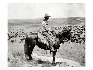 Cowboy minding the cattle