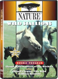 New Jersey State Animal Horse Equus Caballus From Netstate Com