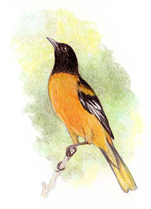 Смотрите в куда отдать птицу книга